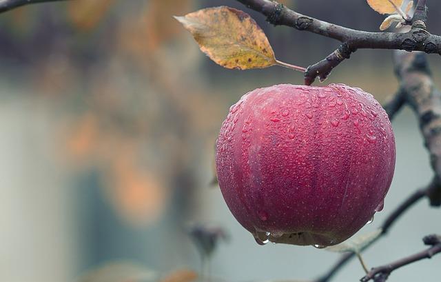 Prosty sposób na przechowanie jabłek