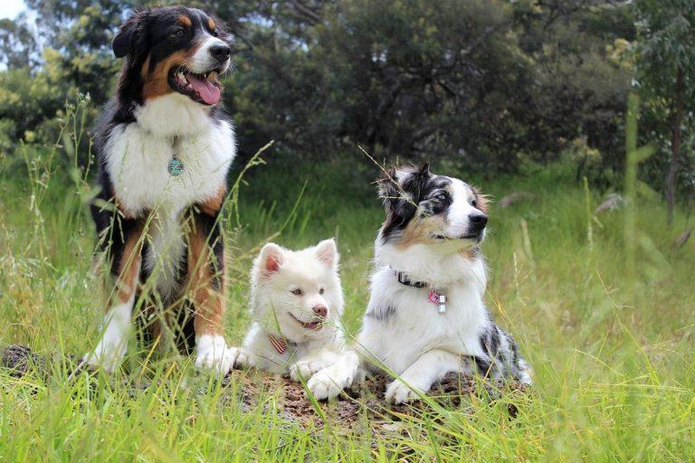 Proste sztuczki, dzięki którym Twój pies będzie szczęśliwszy i zdrowszy